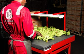 bureau veritas fruit inspection